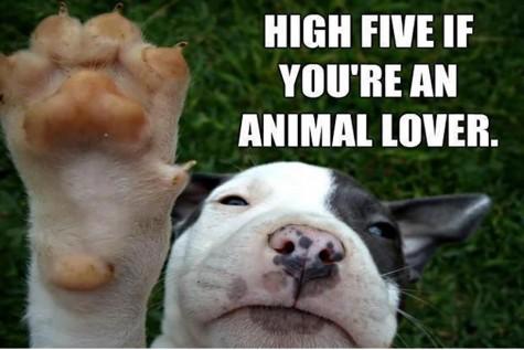 Don't shame non-vegetarian animal lovers
