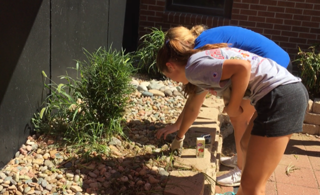 Seniors Madyson Flax and Kallie Leiker pull weeds in the outdoor classroom. All officers helped clean the patio on Aug. 9.