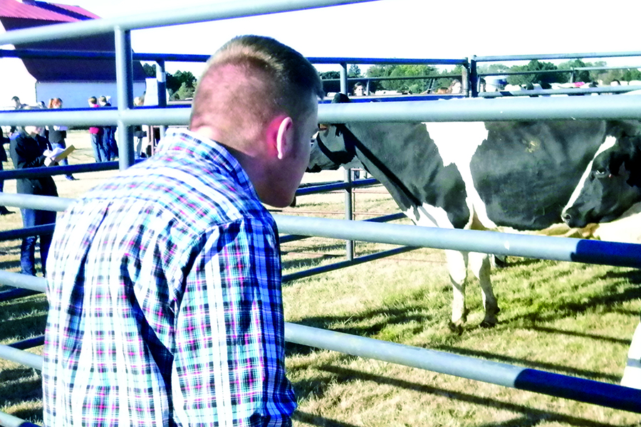 A student observes a dairy cow at the event on Oct. 10.