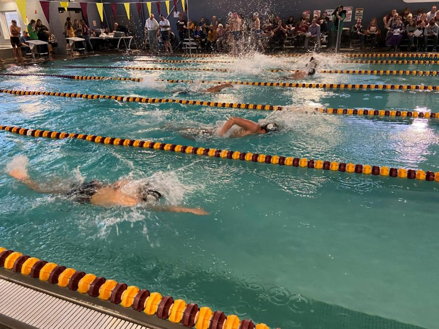 The swimmers take off into their 50 freestyle race.