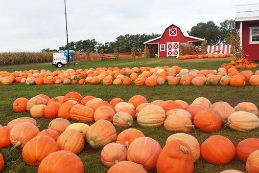 Pumpkin craze plagues student body