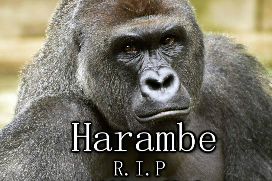 Harambe died too soon