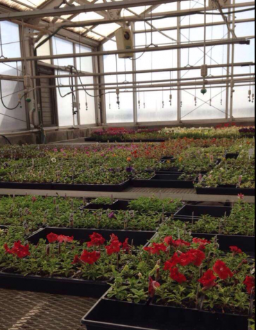 Future Farmers of America put on Spring Flower Sale to raise money for program